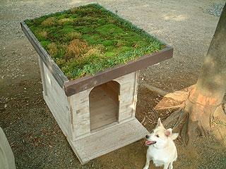 板倉工法でつくった犬小屋の屋根