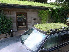 車の屋根緑化