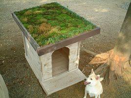 犬小屋の屋根緑化